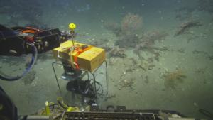 Photo: Ocean Exploration Trust and ECOGIG Consortium